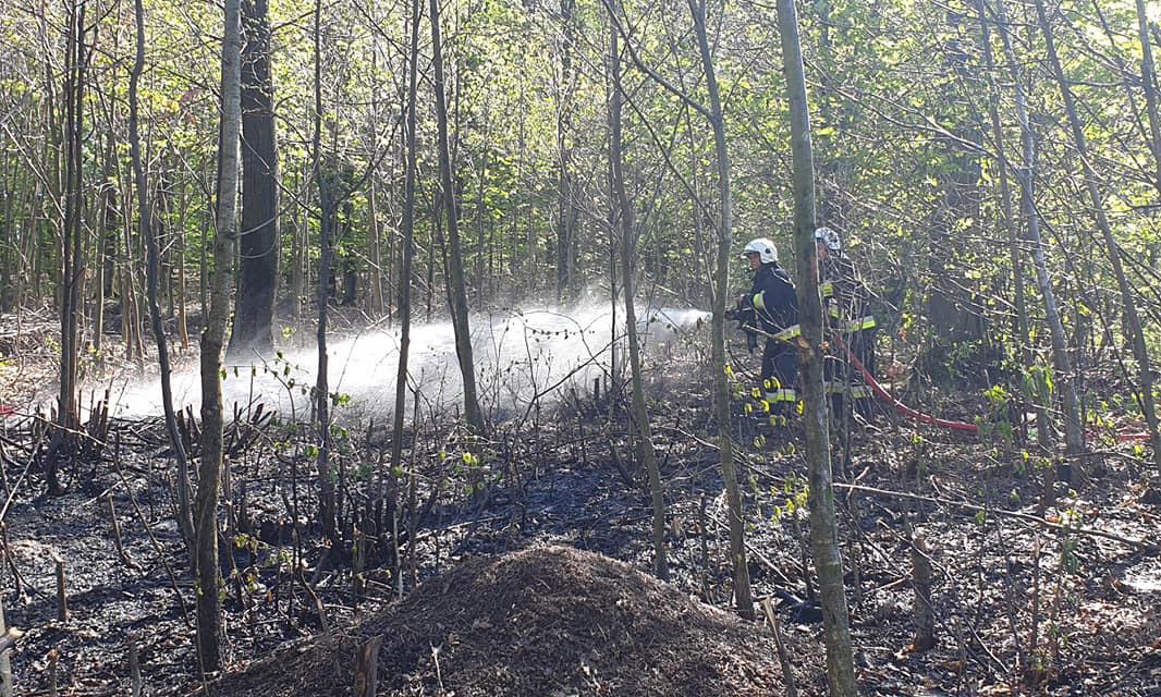 Płonął las w Żółkiewce [FOTO]