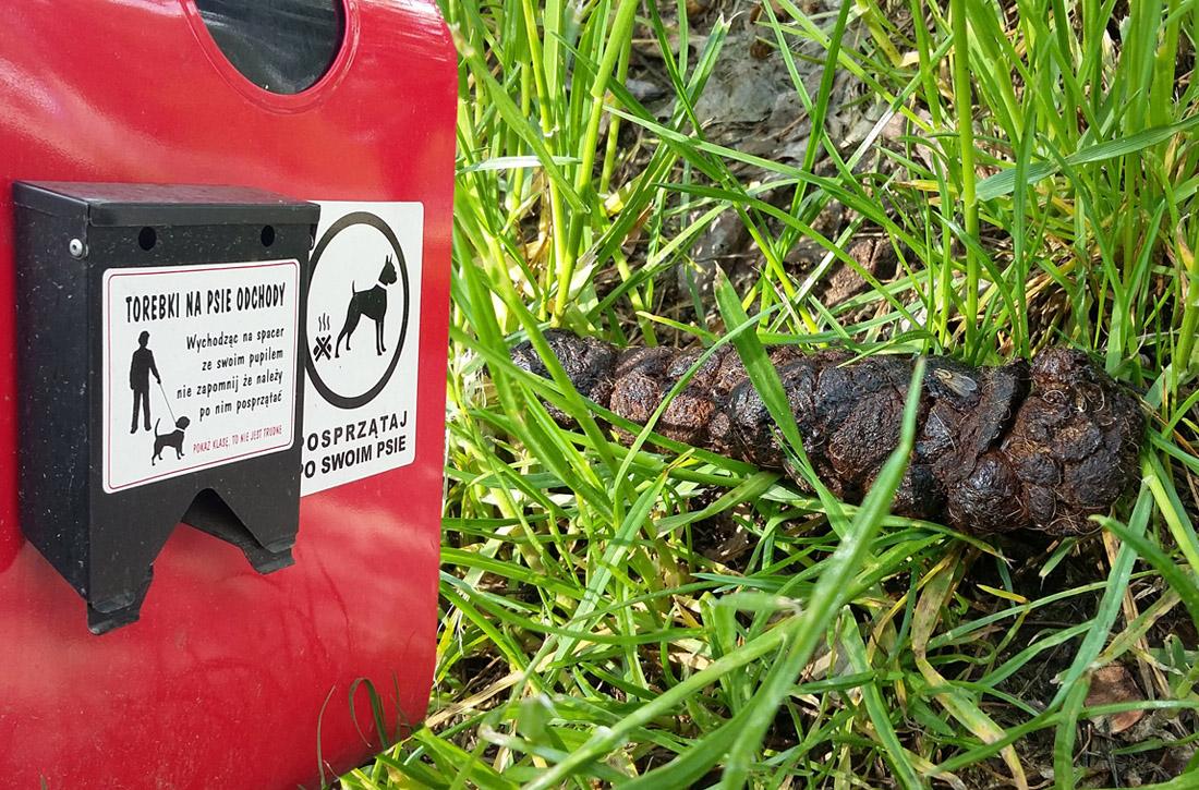 Niebezpieczne psie odchody