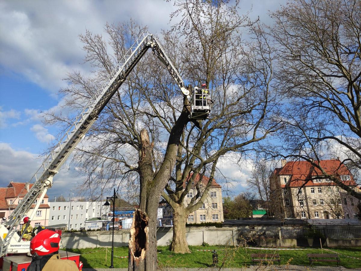 Obok ławek i chodnika runął konar drzewa! [FOTO]