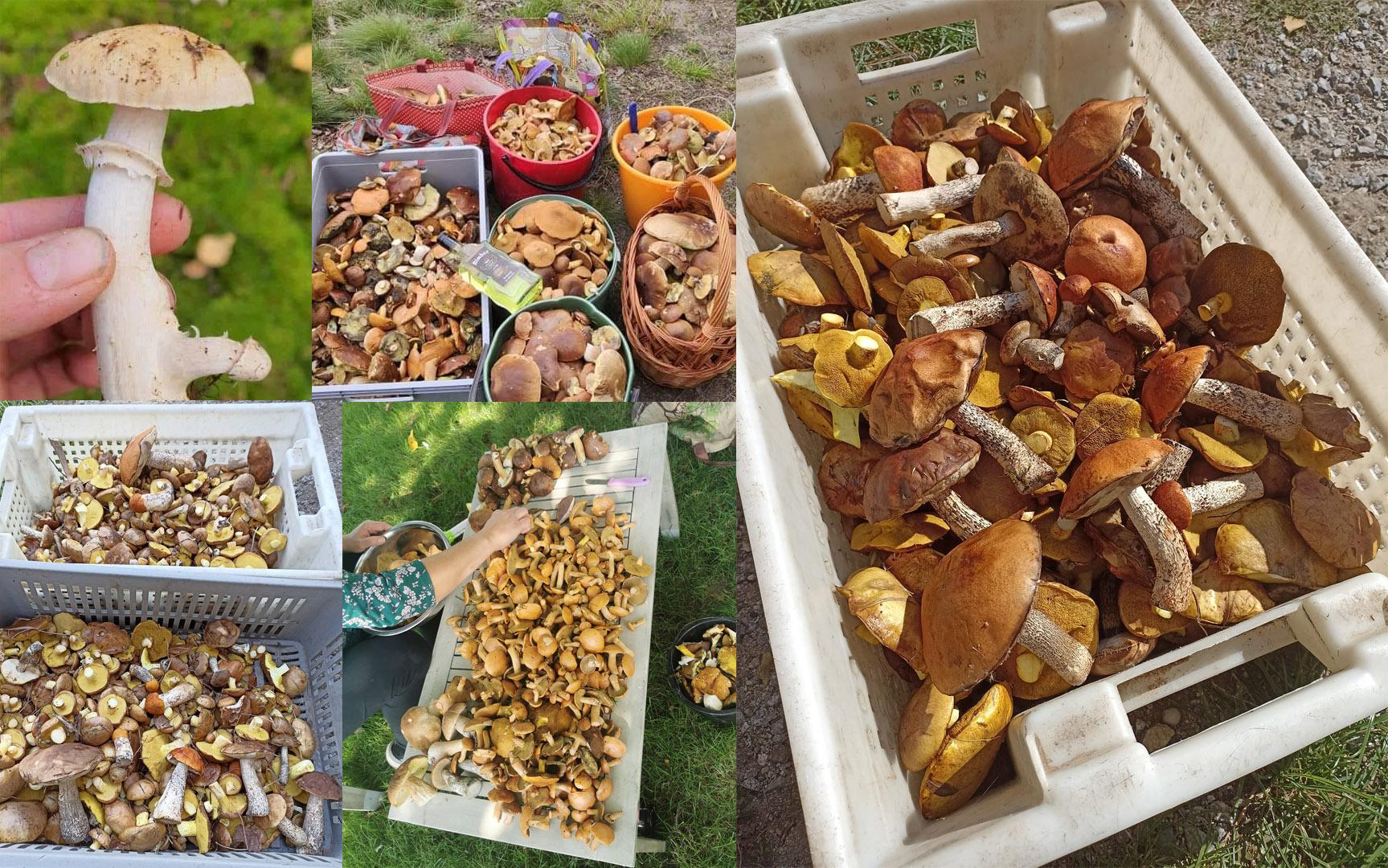 Wysyp grzybów w regionie. Czytelnicy pochwalili się swoimi zbiorami [FOTO]