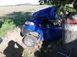 24-latek uderzył w drzewo! [FOTO]